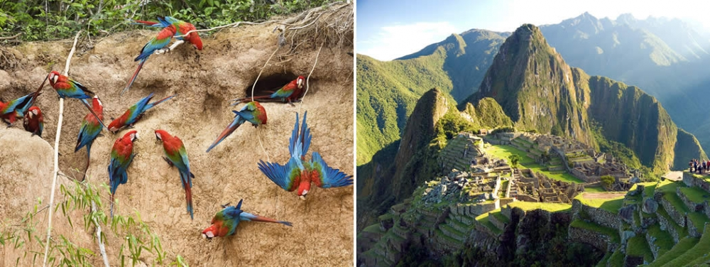 tambopata-national-reserve-machu-picchu amazon peru south america travel tour package vacation visit