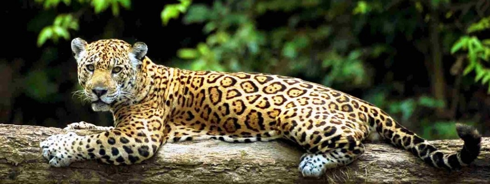 manu national park tour tour packages travel visit vacation peru south america